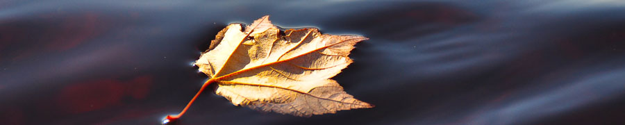 leaf_on_water